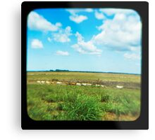 Cattle Walk the Line Metal Print