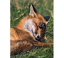 Bashful Photographic Print