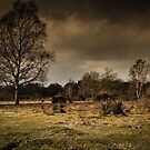 Storm clouds and heathlands by JEZ22