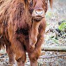 Cow by JEZ22
