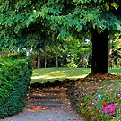 Nature path by Kallian