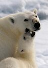 Polar Love - Crop by Steve Bulford