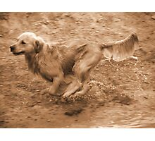 Move........... Photographic Print