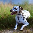 Rest in the Grass. Kokkie. Dalmatian Dog by JennyRainbow