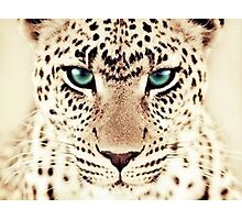 Green eyed tiger Photographic Print