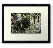 More Swamp Reflections Framed Print