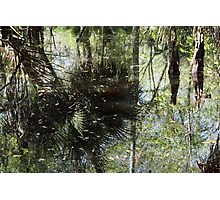 More Swamp Reflections Photographic Print