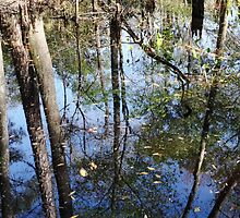 Still More Swamp Reflections by Carol Bailey White