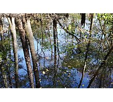 Still More Swamp Reflections Photographic Print