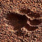 Panthera Leo by Leon Rossouw