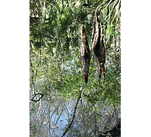 Yet Another Swamp Reflection Photographic Print