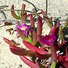 Australian Beach: The Bee by Cheryl Parkes