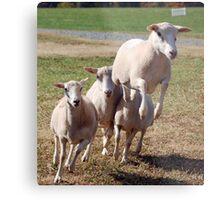 Leaping Sheep Metal Print