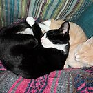 Snoozing Kittens by Barberelli
