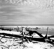 Debris on a Deserted Beach by Honor Kyne