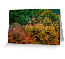 Nature's Colours Greeting Card