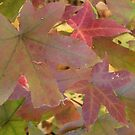 leaves by crosses