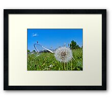 Dandelion clock and wind blown seed Framed Print