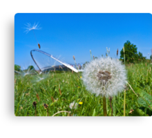 Dandelion clock and wind blown seed Canvas Print
