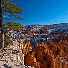 Barely Holding On, Bryce Canyon Sunrise Point by photosbyflood