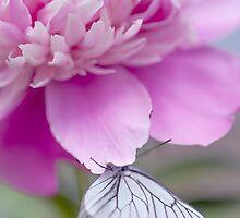 Beautiful Friendship by JennyRainbow