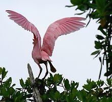 Beautiful Wings by Karen  Moore