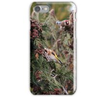 Goldfinches iPhone Case/Skin