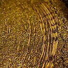 Golden olive trail by Zvonko Jerkovic