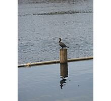 Bird on the Water Photographic Print