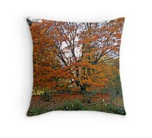 An English Beech Tree in it's Autumn Colours Throw Pillow