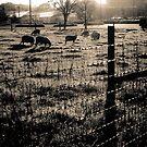 sheep by Kate Wilhelm