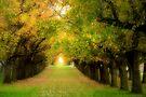 Autumn Elms by Ern Mainka