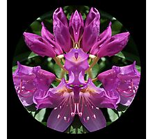 Unatural Nature Image Series. 01 Photographic Print