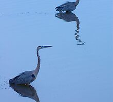 Great Blue Herons by Joshua Hakin
