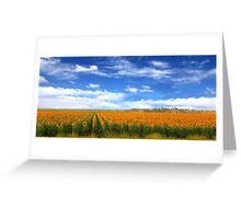 Sunflower Fields - Free State, South Africa Greeting Card