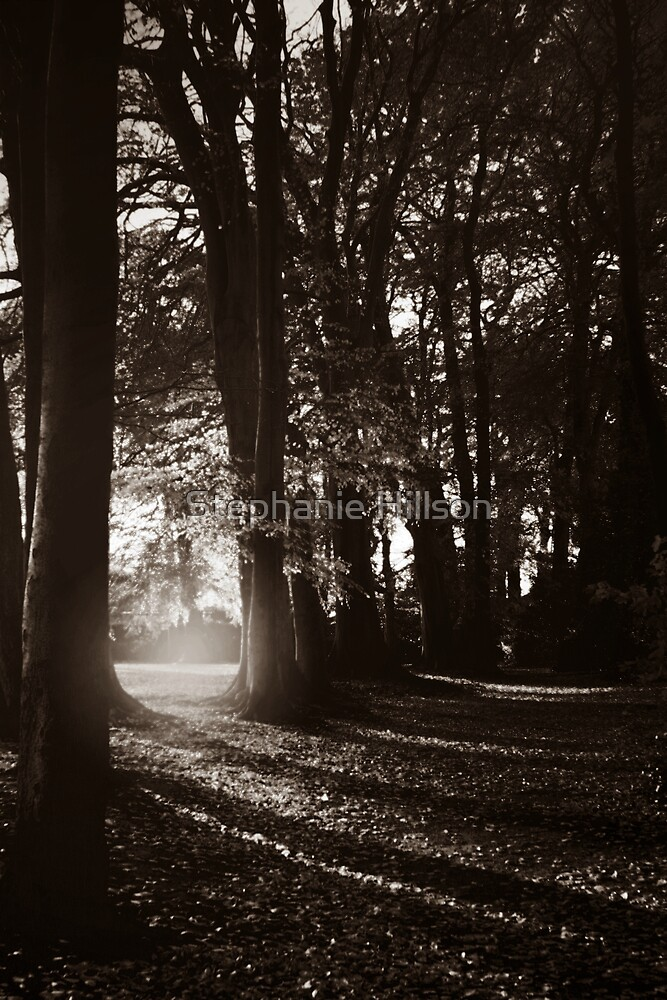 Forest of Fear by Stephanie Hillson