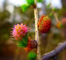 Spring Buds by Eugenio