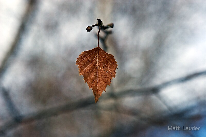 Autumn in the Snowy Mountains by Matt  Lauder