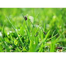 Beetles in Grass Photographic Print