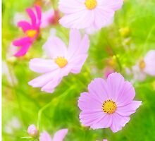 Summer Colours by Garvin Hunter