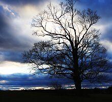 winter approaches... by Jason Platt