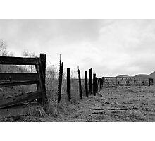 bull fence Photographic Print