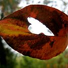 heart leaf by Nicole M. Spaulding