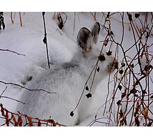 Bush Bunny...HaHa Can't See Me Photographic Print