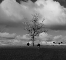 Coming in From the Fields.  by Phototaffic