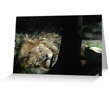 Let Sleeping Lions Lie Greeting Card
