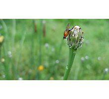 Small creatures celebrate 9 Photographic Print