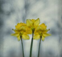 Wishing for Warmer Weather by Carol Harris