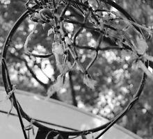 Old Hoops by Alex Baker