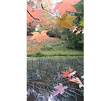 Autumn song 1 Photographic Print